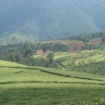<!--:en-->From Kigali<!--:-->